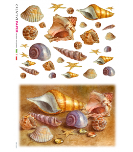 Carta di riso Decoupage: Conchiglie