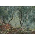 Claude Monet - Ulivi al giardino Moreno. Stampa su tela