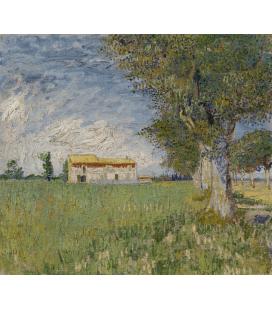 Stampa su tela: Vincent Van Gogh - Cottage bianco tra gli alberi di ulivo