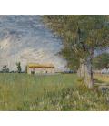 Vincent Van Gogh - Cottage bianco tra gli alberi di ulivo. Stampa su tela