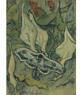 Vincent Van Gogh - Farfalle. Stampa su tela