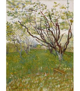 Vincent Van Gogh - Frutteto in fiore. Stampa su tela