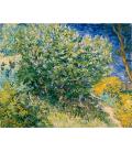 Printing on canvas: Vincent Van Gogh - Almond Blossom