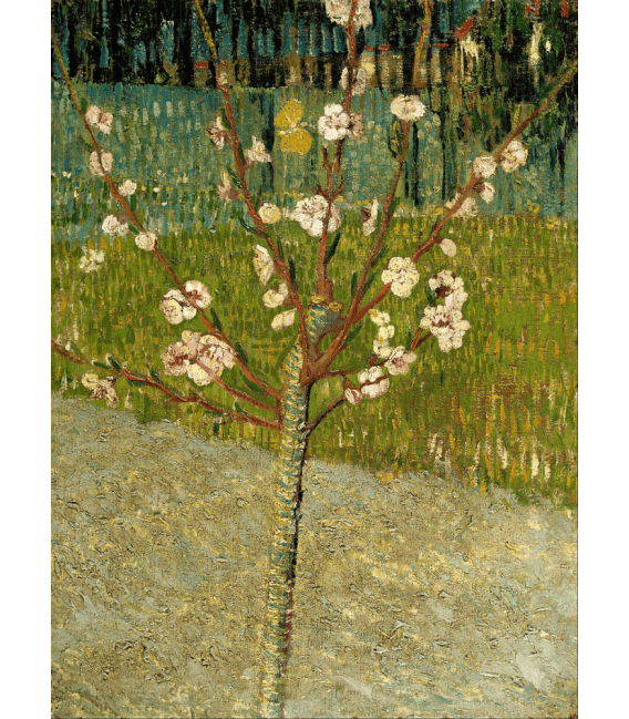 Printing on canvas: Vincent Van Gogh - Almond Blossom 2