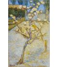 Stampa su tela: Vincent Van Gogh - Pero in fiore