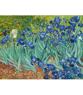 Vincent Van Gogh - Gli iris. Stampa su tela