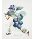 Salvador Dalì - Le Prunier Hatif. Print on canvas.