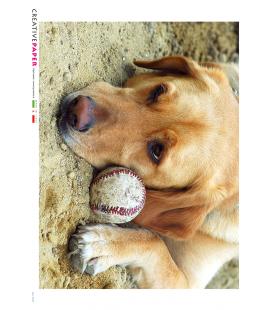 Carta di riso Decoupage: Cane con Palla da Beseball