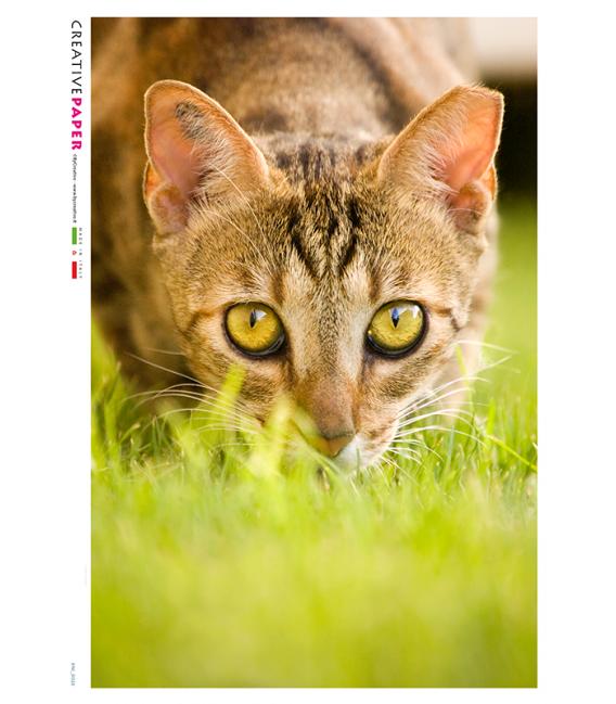 Decoupage rice paper: Cat, Closeup