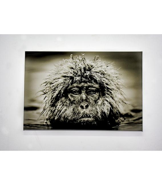 Grumpy Mokey - Reproduction on canvas