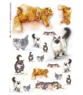 Carta di riso Decoupage: Gatti, Acquerello