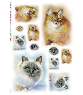 Carta di riso Decoupage: Gatto, Primo Piano e Occhio. Dipinto